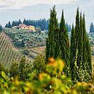 Tuscany Italy by Murray Swift