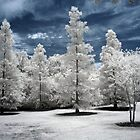 Trees (Infrared) by Vicky Hamilton