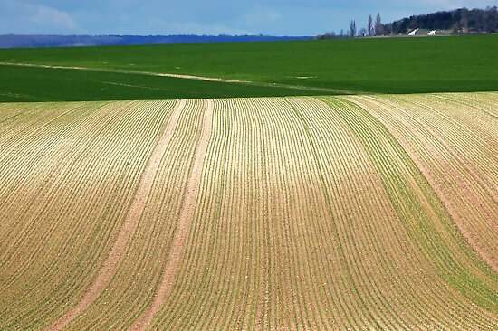 Open fields in Chouilly. by Victor Pugatschew