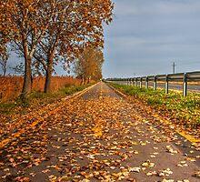 Cycling away by PeterCseke
