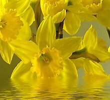 Yellow burst by Steve plowman