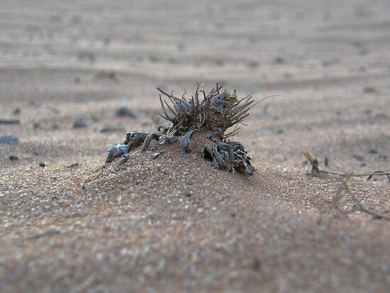 Drought, close-up. by binjy