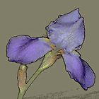 iris by peggywright