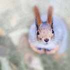Squirrel looks at you from the bottom up by luckypixel