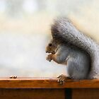 Squirrel on a bench and some nuts by luckypixel