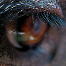 ANIMAL EYELASH by SofiaYoushi