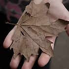 The leaf by JCRPhotos