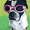 Boston Terrier in Goggles by ria hills