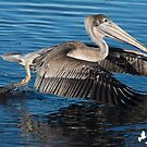 PELICAN GOING THE OTHER WAY by imagetj