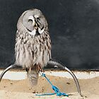 Great Grey Owl by lisa1970