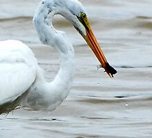 Egret with Brim by Troy Spencer