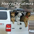 3 Dogs and Truck...Merry Christmas by dfrahm