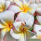 Soft Plumeria Natural Bouquet by djphoto