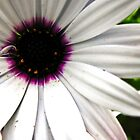 Attention Seeking Flower by UseR2006
