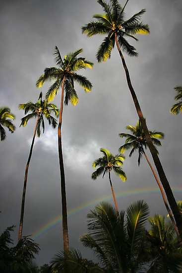 Kauai Palms by Philip James Filia