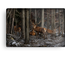 Elk in the Forest Metal Print