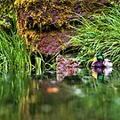 Spring at the Japanese Gardens  by Deri Dority