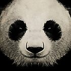panda eyes 02 by vinpez