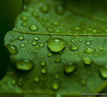 After the Rain - Bright Green Leaf by BLaskowsky
