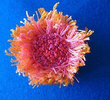 sunflower sunburst (©k.denmark) by Kay Denmark