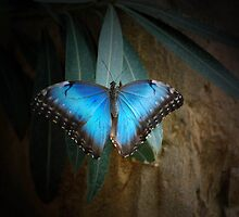 Blue Painted Lady by Maria Dryfhout