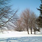 Mixed Winter Trees at Iowa Farm - Horizontal View - Feb 2008 by Christopher Johnson