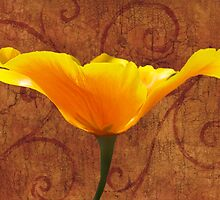 California Poppy by Leah Highland