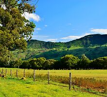 The Border Ranges by Terry Everson