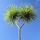 Cabbage Tree by ardwork