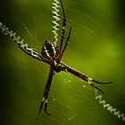 St Andrews Spider by Maggiebee