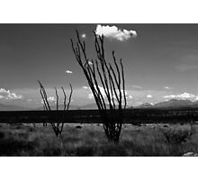 Arizona Desert Photographic Print
