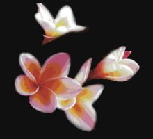 Frangipani #2 by Virginia McGowan