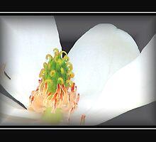 Flowering by George  Link