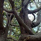 Just one tree, Rockhampton Qld Australia by Sandra  Sengstock-Miller