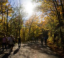 Mount Royal, Montreal by JessDismont