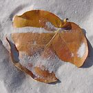 Leaf it to me to find this on the Beach by Susan Zohn