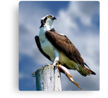 Osprey with Pike Canvas Print