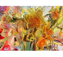 Daffodils HDR Photographic Print