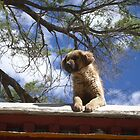 Dog on a roof by Michelle Thomson