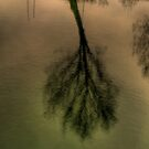 Treeflection! by Gaurav Dhup
