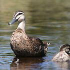Duck and duckling by John Hansen