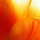 Tulip Textures by ScarletSass