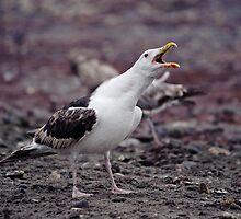 Birds With Attitude - 2 by Jim Haley