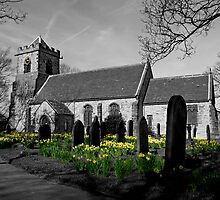 Hopton Daffs by Becky Stead