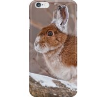 Snow Shoe Hare  iPhone Case/Skin