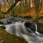Golitha Falls, Cornwall by Caroline Bland
