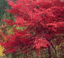 Fall Colors in the North Cascades by Lynn Bawden