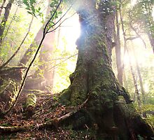 Enchanted Forest, Franklin-Gordon Wild Rivers National Park, Tasmania  by Michael Boniwell