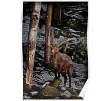Ibex on Hill Poster