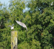 Seagull Takes Over Post Part 2 by Happystiltskin